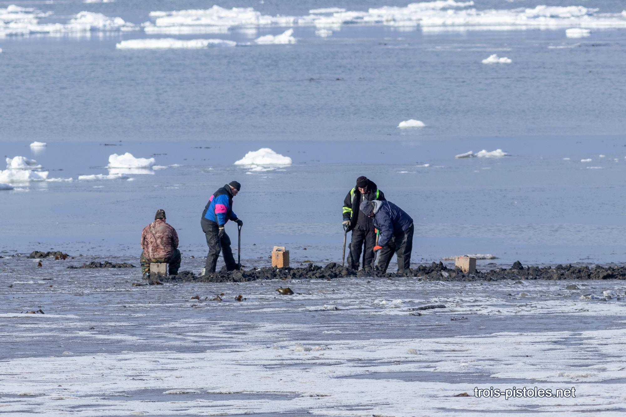Trois-Pistoles 14 janvier 2020  Cueillette de mollusques sur la grève du havre près du quai.  Il s\'agit d\'une activité totalement inhabituelle en se temps-ci de l\'année puisque normalement il y a couvert de glace sur les berges.
